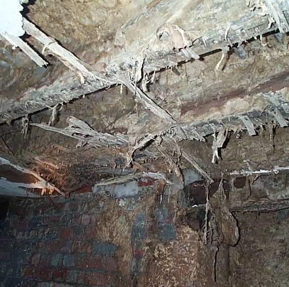 Cellar-Rot
